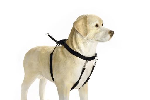 Beeztees Gentle Walker S (Westy) voor de hond Per stuk