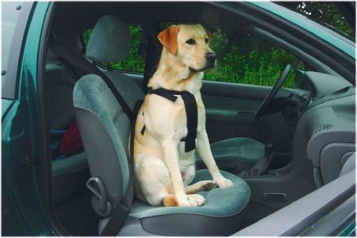 Beeztees Wandel en Autogordel Hondentuig S